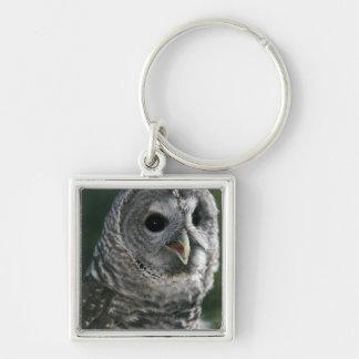 USA, Washington State. Barred Owl (Strix varia) Silver-Colored Square Key Ring