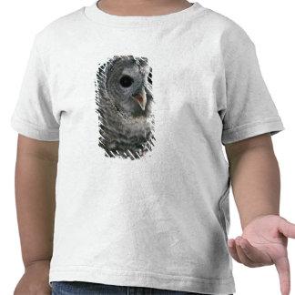 USA, Washington State. Barred Owl (Strix varia) Tshirts