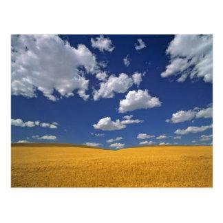 USA, Washington State, Colfax. Ripe barley meets Postcard