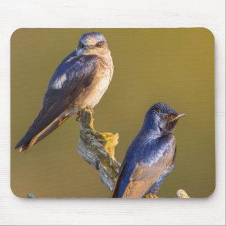 USA, Washington State. Female And Male Purple Mouse Pad
