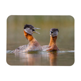 USA, Washington State. Mated Red-Necked Grebes Rectangular Photo Magnet