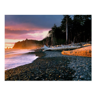 USA, Washington State, Olympic NP. Waves lap the Postcard