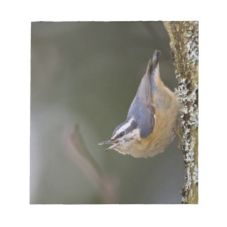 USA, Washington State, Red-brested Nuthatch, Notepad
