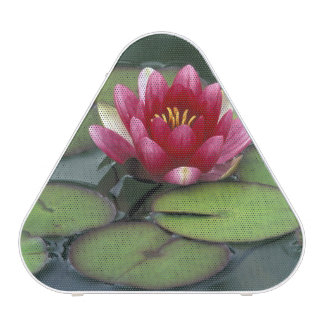 USA, Washington State, Seattle. Water lily and