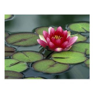 USA, Washington State, Seattle. Water lily and Postcard