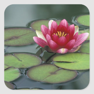 USA, Washington State, Seattle. Water lily and Square Sticker