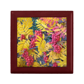 USA, Washington, Western Mountain Ash, Okanogan Small Square Gift Box