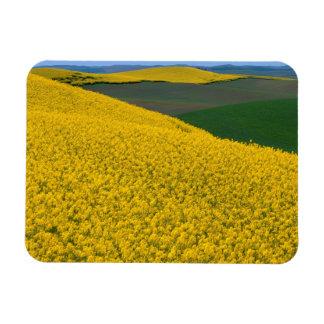 USA, Washington, Whitman County, Palouse, Canola Rectangular Photo Magnet
