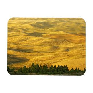 USA, Washington, Whitman County, Palouse, Wheat Rectangular Photo Magnet