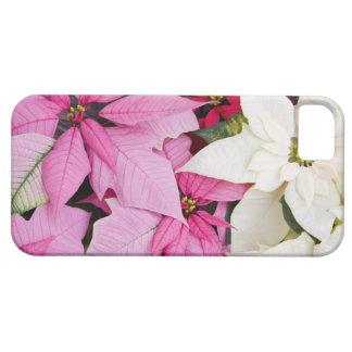 USA, Washington, Woodinville, Molbak's Nursery, 2 Case For The iPhone 5