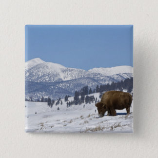 USA, WY, Yellowstone NP, American Bison Bison 15 Cm Square Badge