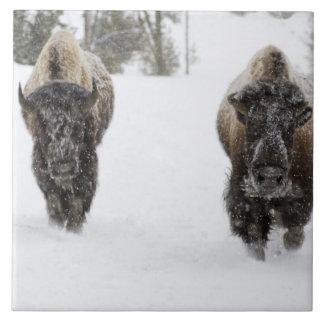USA, WY, Yellowstone NP, American Bison (Bison Tile