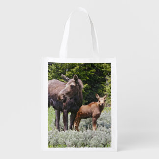 USA, Wyoming, Bighorn Mountains, moose Alces