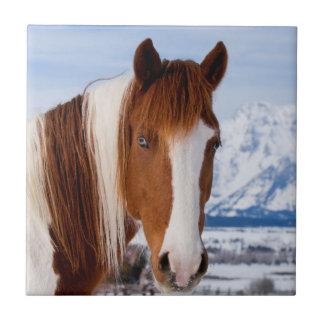 USA, Wyoming, Grand Teton National Park 3 Ceramic Tile