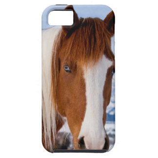 USA, Wyoming, Grand Teton National Park 3 iPhone 5 Cases