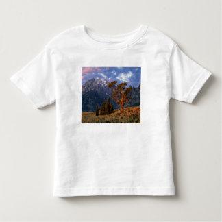 USA, Wyoming, Grand Teton NP. A lone cedar T Shirt