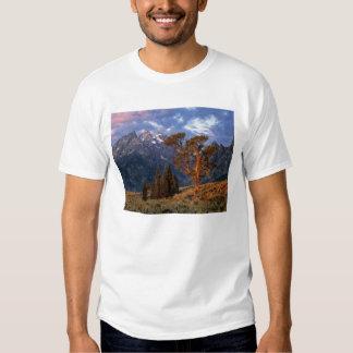 USA, Wyoming, Grand Teton NP. A lone cedar T-shirts