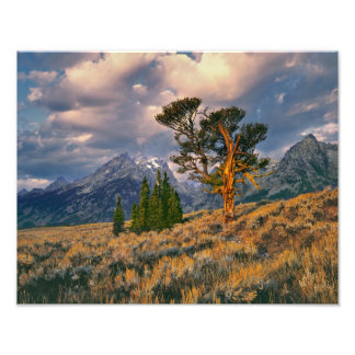 USA, Wyoming, Grand Teton NP. Sunrise greets a Photographic Print