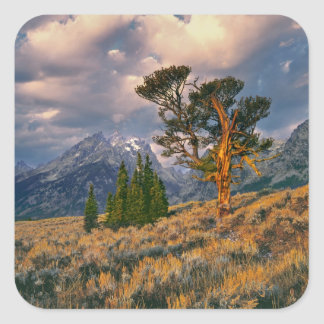 USA, Wyoming, Grand Teton NP. Sunrise greets a Square Sticker