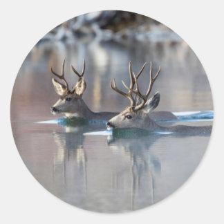 USA, Wyoming, Mule Deer bucks swimming lake Round Sticker