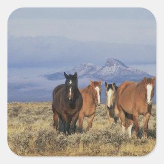 USA, Wyoming, near Cody Group of horses, Heart Square Sticker