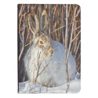 USA, Wyoming, White-tailed Jackrabbit sitting on