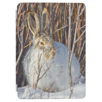 USA, Wyoming, White-tailed Jackrabbit sitting on iPad Air Cover