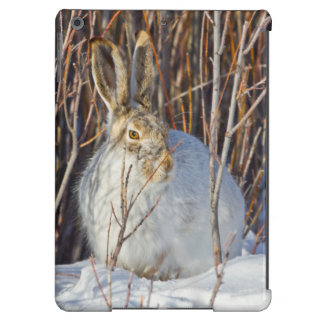 USA, Wyoming, White-tailed Jackrabbit sitting on iPad Air Covers