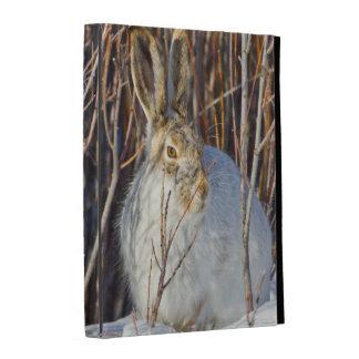 USA, Wyoming, White-tailed Jackrabbit sitting on iPad Folio Case
