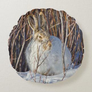 USA, Wyoming, White-tailed Jackrabbit sitting on Round Cushion