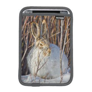 USA, Wyoming, White-tailed Jackrabbit sitting on Sleeve For iPad Mini