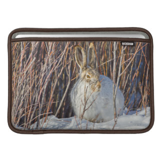 USA, Wyoming, White-tailed Jackrabbit sitting on Sleeve For MacBook Air