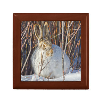 USA, Wyoming, White-tailed Jackrabbit sitting on Small Square Gift Box
