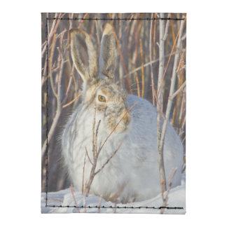 USA, Wyoming, White-tailed Jackrabbit sitting on Tyvek® Card Wallet