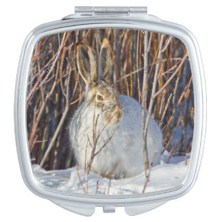 USA, Wyoming, White-tailed Jackrabbit sitting on Vanity Mirror