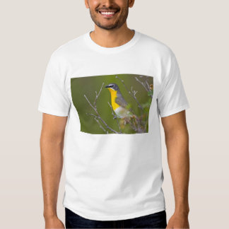 USA, Wyoming, Yellow-breasted Chat Icteria Tshirt