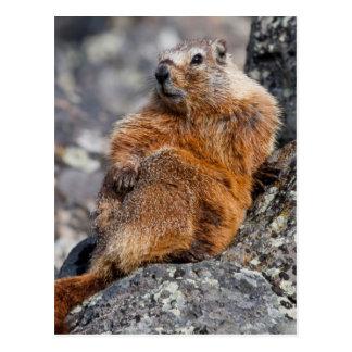 USA, Wyoming, Yellowstone National Park 1 Postcard
