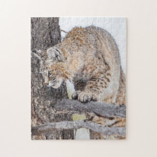 USA, Wyoming, Yellowstone National Park, Bobcat 2 Jigsaw Puzzle