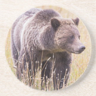 USA, Wyoming, Yellowstone National Park, Grizzly 3 Coaster