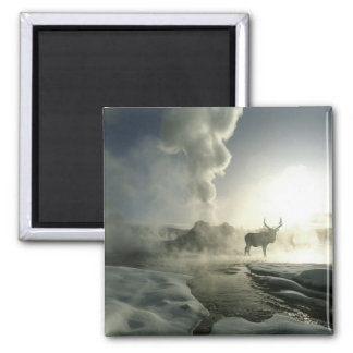 USA, Wyoming, Yellowstone National Park. Sunrise Magnet