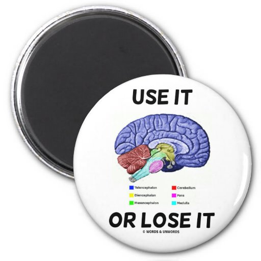 Use It Or Lose It (Brain Anatomy Humor Saying) Magnets