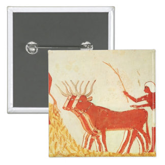 Using cows to trample wheat 15 cm square badge