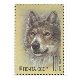USSR ~ Stamp Russian Wolf Postcard