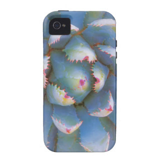 Utah, Dixie National Forest. Close-up of yucca Vibe iPhone 4 Cover