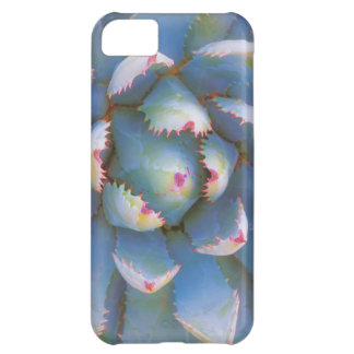 Utah, Dixie National Forest. Close-up of yucca iPhone 5C Case