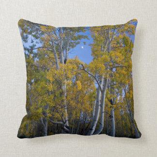 Utah. USA. Aspen Trees And Moon At Dusk Cushion