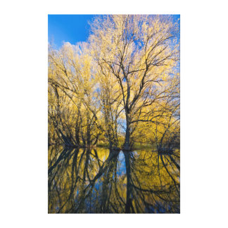 Utah. USA. Peachleaf Willow Trees Stretched Canvas Prints