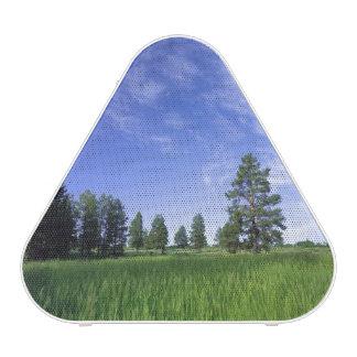 UTAH. USA. Ponderosa pines Pinus ponderosa) &