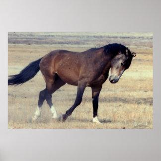 Utah Wild Mustang Print
