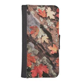 Utah, Zion National Park, Patterns of autumn